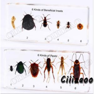 6 Kinds of Beneficial Insect and 6 Kinds of Pests specimen paperweight Taxidermy Collection Specimen