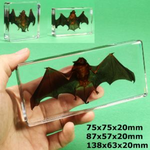 Acrylic Lucite Transparent Bat Specimen Animal Insect Taxidermy Amber Children Educational Biological Collection Craft DIY Toy