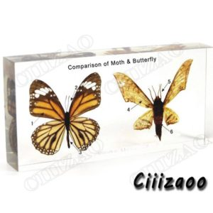 Comparison of Moth & Butterfly specimen paperweight Taxidermy Collection embedded In Clear Lucite Block Embedding Specimen