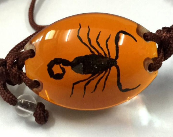 FREE SHIPPING 10 Bracelet Collection Bug Bracelet with REAL Scorpion In Orange Resin TAXIDERMY GIFT
