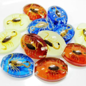FREE SHIPPING 12 PCS GOLD SCORPION COLORFUL BOTTOM BEAD INSECT COOL FINE TAXIDERMY GIFT