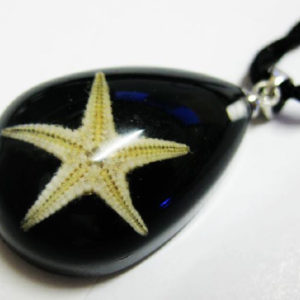 FREE SHIPPING 12 PCS NEW REAL BLACK STARFISH LUCITE CHARMING PENDANT INSECT JEWELRY TAXIDERMY GIFT