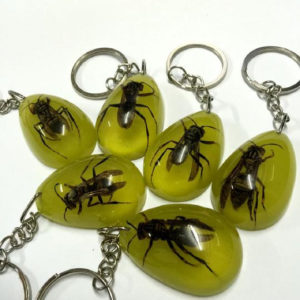 FREE SHIPPING 15 Keychain Real Bee Insect Taxidermy Fashion Jewelry