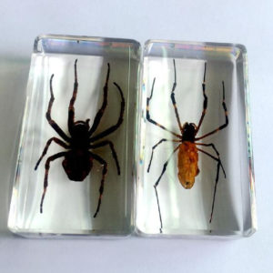 FREE SHIPPING 2 pcs Handmade Real Two Style Spider Taxidermy Trendy Jewelry