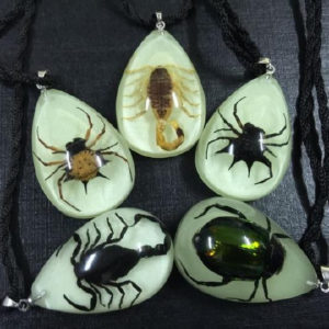 FREE SHIPPING 50 PCS NEW REAL SCORPION SPIDER BEETLE PENDANT INSECT JEWELRY TAXIDERMY