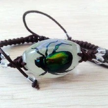 FREE SHIPPING Glow Lucite Rectangular Twisted Band Bracelet Fine Genuine Rutelian Beetle TAXIDERMY GIFT