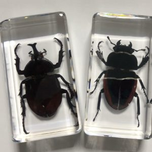 FREE SHIPPING yqtdmy 2 PCS Fashion Specimen Taxidermy Paperweight embedded Collection