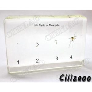 Life Cycle of Mosquito Specimen paperweight Taxidermy Collection embedded In Clear Lucite Block Embedding Specimen