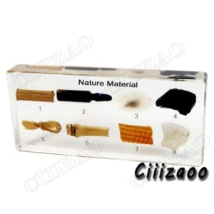 Natural Material Specimen paperweight Taxidermy Collection embedded In Clear Lucite Block Embedding Specimen