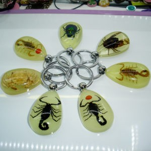 Scorpion Glow Lucite Keyring Keychain Insect Jewelry Taxidermy Gift