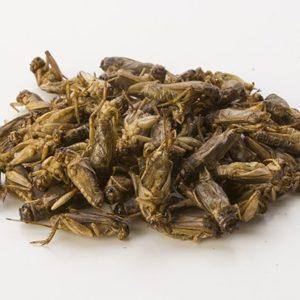 Small crickets (Acheta Domesticus)