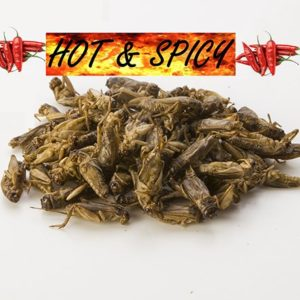 Small edible crickets hot and spicy flavor