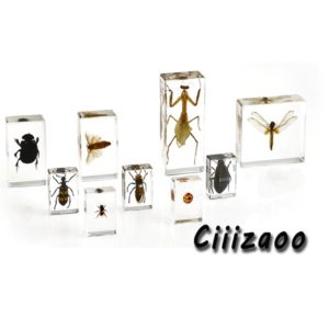 Snake specimen animal paperweight Taxidermy Collection embedded In Clear Lucite Block Embedding Specimen