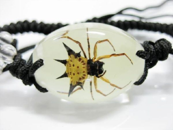 free shipping Accessories Real Insect Stinging Angle Spider Oval Bracelet Glow in dark SPECIMEN TAXIDERMY INSECT GIFT