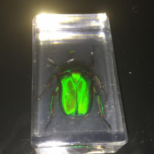 free shipping Handmade Scarab beetle green back real in acrylic Specimen Taxidermy